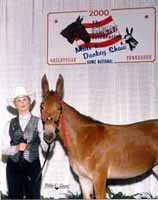 Sexy Lexi, the molly mule (5401 bytes)