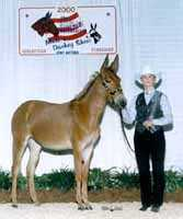 Sexy Lexi, the molly mule (5597 bytes)