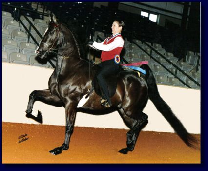 2004 National Academy Finals Championship Winner ~ LaBella's King, Amy Deal up for Peavine Creek Farm!!